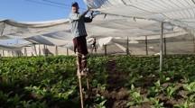 Robaina Plantation Tour